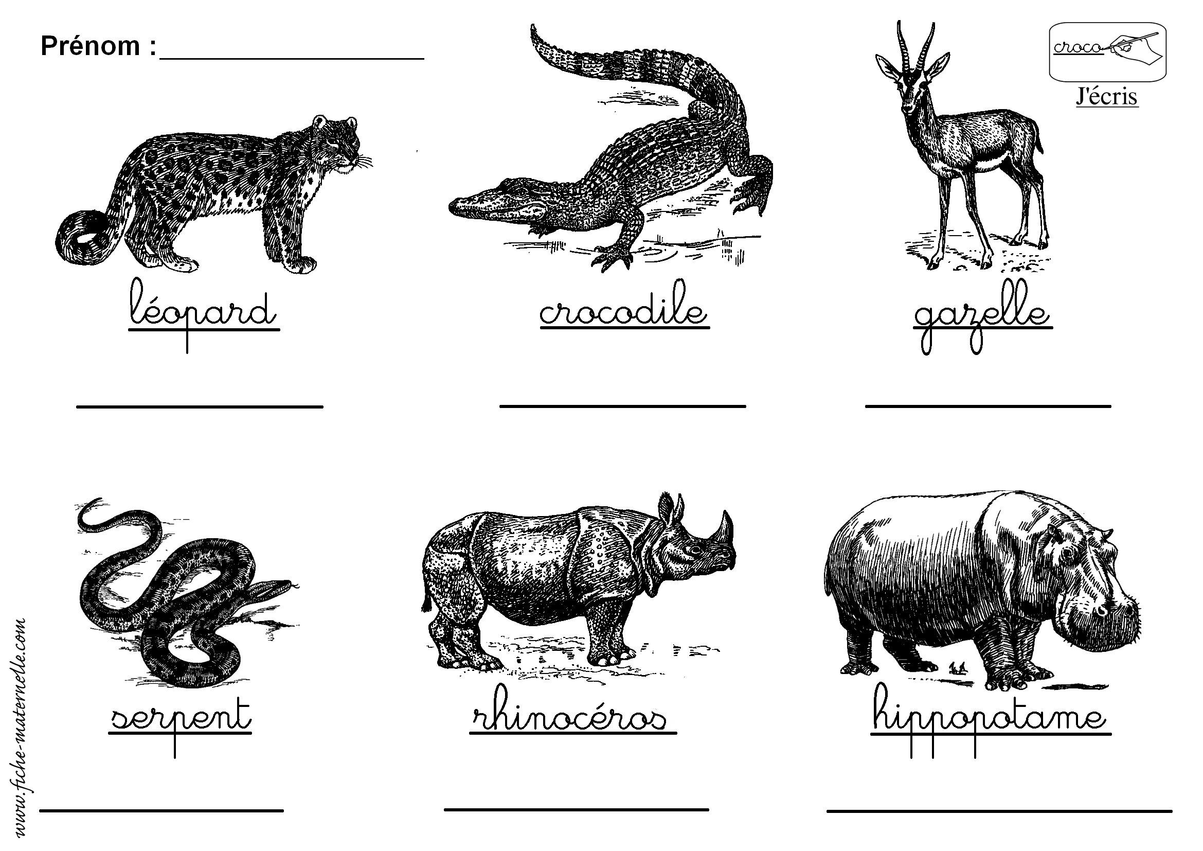 Souvent Lecture autour du nom des animaux d'Afrique OC16