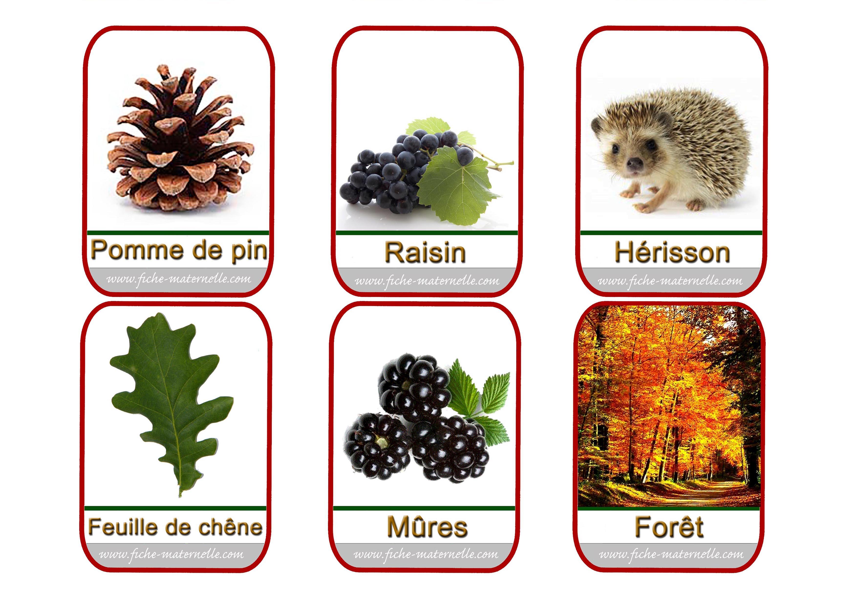 Imagier - Fruits automne maternelle ...