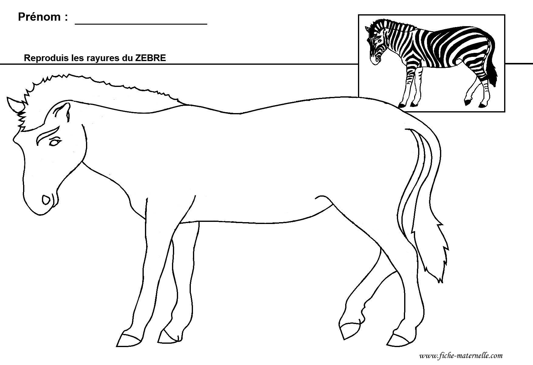 Graphisme gs et ms le z bre - Zebre a dessiner ...