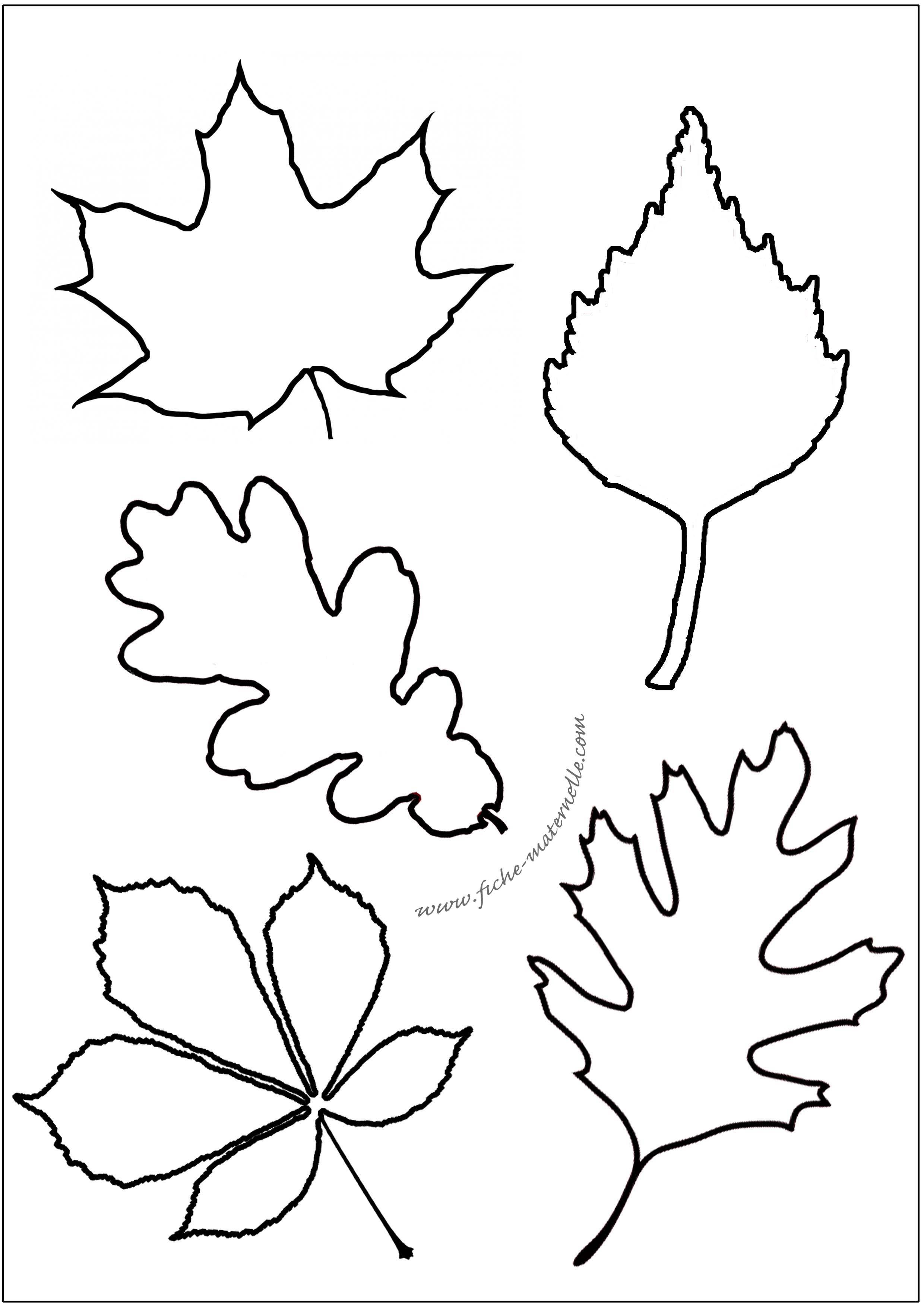 Feuilles d 39 automne la maternelle - Feuille d arbre a imprimer ...